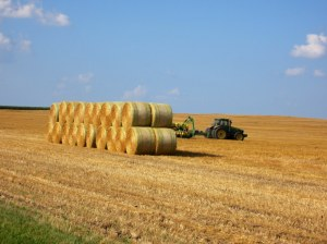 Field & Hay